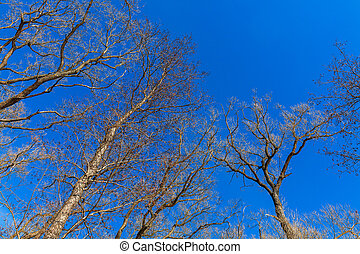Naked tree branches