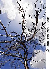 Naked Tree & Bright Cloudy Sky