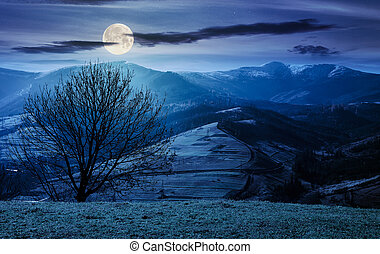naked tree on the grassy hill at night in full moon light....