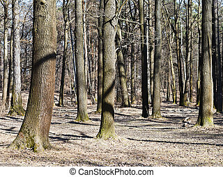 naked trees in early spring