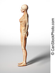Naked woman standing on floor, with bone skeleton superimposed, viewed from a side. With clipping path included.
