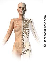 Naked woman body, with bone skeleton.