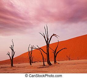 Namib desert - Dead valley in Namibia
