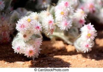 namib, desert., planta, xerophytic, arenoso