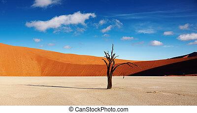 Namib Desert, Sossusvlei, Namibia - Dead tree in Dead Vlei...