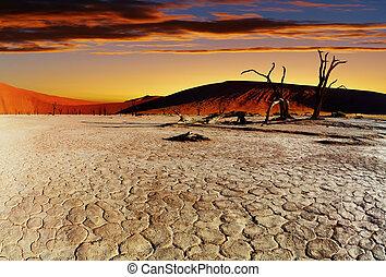 Namib Desert, Sossusvlei, Namibia - Dead Vlei at sunset,...
