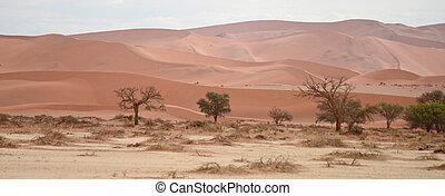 Namib landscape