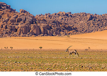 namib-naukluft, antilope, national, oryx, parc, namibie