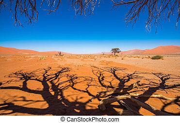 namib-naukluft, camelthorn, dunas, nacional, árboles,...