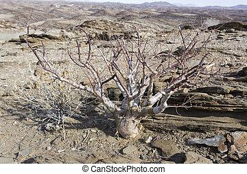namibie, arbre, désert