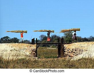 namibio, mujeres, proceso de llevar, heno, mahangu, parque...