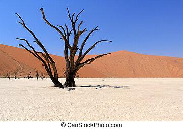 nanib, tot, sesriem, wüste, namibia, tal, sossusvlei, ...