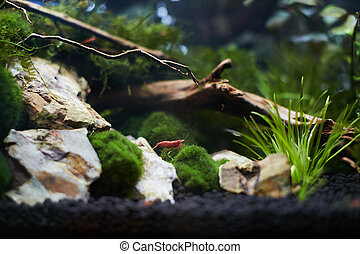 nano aquarium - Shrimp aquarium Photo Collection