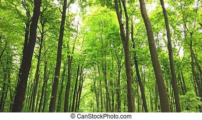 nap, erdő, bitófák, fény