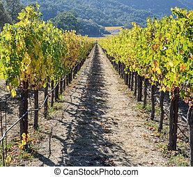Napa Valley California Vineyard in Fall Autumn