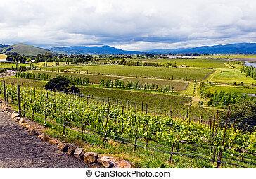 napa, wijngaarden, californië wijn, aanzicht, vallei, ...