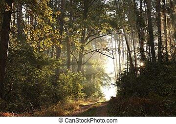 napkelte, ősz erdő