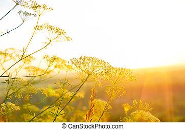 napkelte, alatt, a, nyár