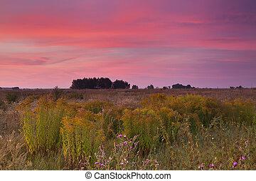 napkelte, képben látható, a, mező, alatt, nyár