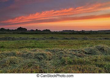 napkelte, képben látható, a, mező