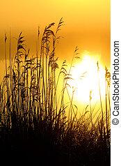 napkelte, noha, reggel, harmat, -ban, egy, tó