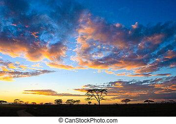 napnyugta, alatt, a, serengeti