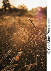 napnyugta, alatt, outback