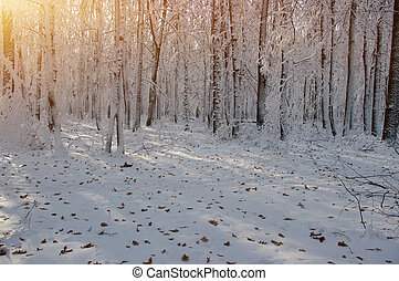 napnyugta, alatt, tél, erdő