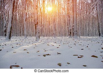 napnyugta, erdő, tél