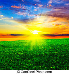 napnyugta, felett, búza terep