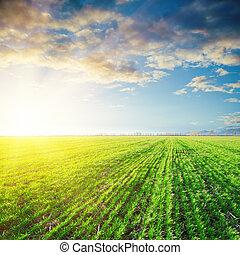 napnyugta, felett, mezőgazdaság, zöld terep