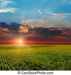 napnyugta, felett, mezőgazdasági, zöld terep