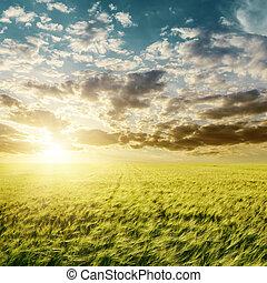 napnyugta, felett, zöld, mezőgazdaság terep