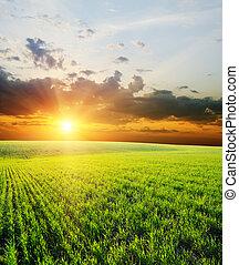 napnyugta, felett, zöld terep