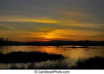 napnyugta, képben látható, kacsa, tó
