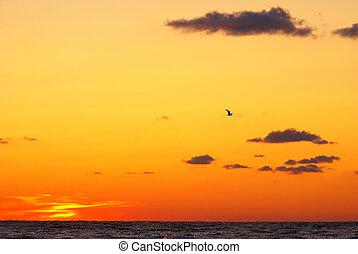 napnyugta, tenger