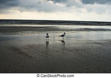 napnyugta, tengerpart., florida, színhely, két