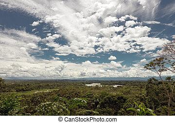 napo, palangana,  river's,  rainforest