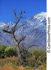 nappal, természet, részletek, napkelte, alatt, a, hegylánc, hegyek, californa