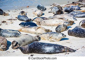 Napping Harbor Seals