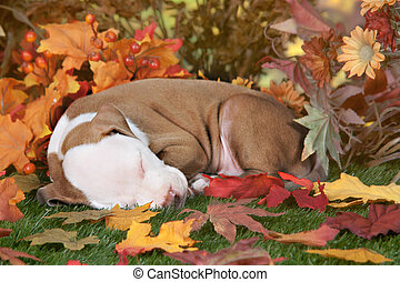 Napping in Fall Foliage
