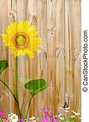 napraforgó, festmény, képben látható, kerítés