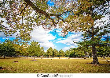 nara, cerf, à, automne, japon