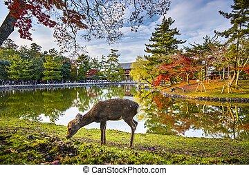 Nara Deer - Deer grazes near Todai-ji Temple in Nara, Japan.