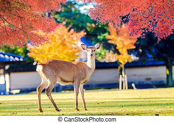 Nara deer roam free in Nara Park, Japan for adv or others...