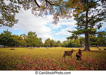 Nara Park at fall, Japan