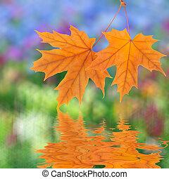narancs, ősz kilépő