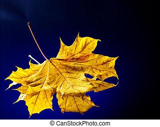 narancs, ősz, leaves.