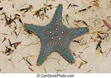 narancs, zöld, tengeri csillag