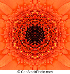 naranja, concéntrico, flor, center., mandala,...